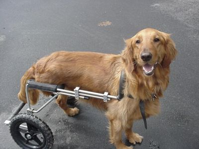 Eddie S Wheels Freedom For Disabled Dogs Networx