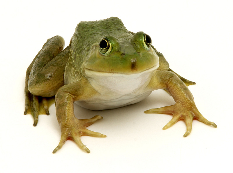 Advice On Keeping Frogs And Other Critters Out Of Your