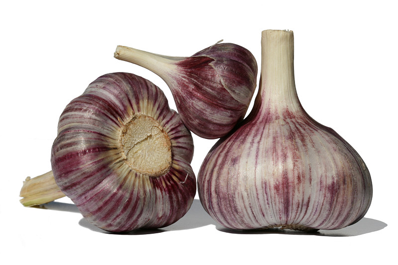 Garden Pests: Garlic is Your Enemy! - Networx