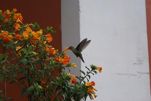 Attracting Hummingbirds and Butterflies to Your Garden ...