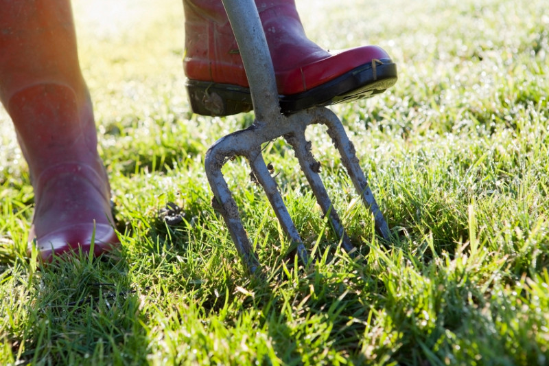 Dethatching Your Lawn Networx