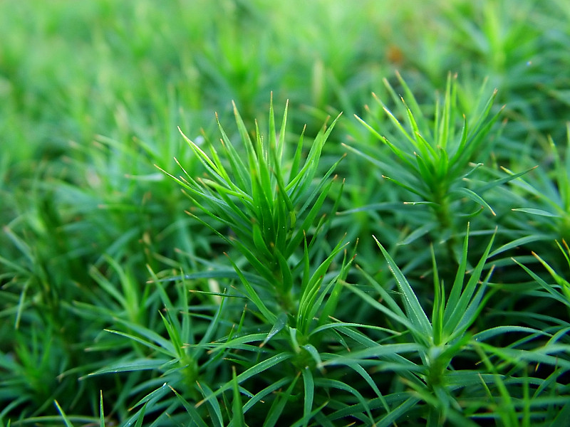 Moss Ground Covers Networx