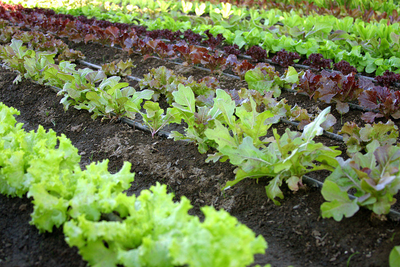Spring Vegetable Gardening Schedule For Temperate Climates